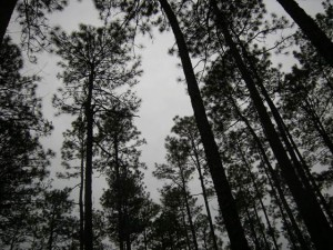 Cover photo for CCP Meeting About Sustainable Forestry in Chatham County