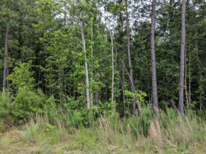 Cover photo for Register Now for Extension's Weed Management for Forest Landowners Workshop
