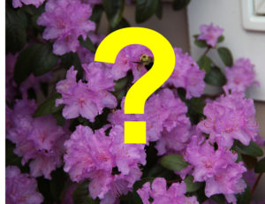 Cover photo for Get Your Garden Questions Answered Here!