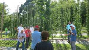 people standing in front of hop plants