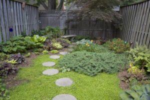 Smal backyard landscape