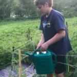 4-H Gardener