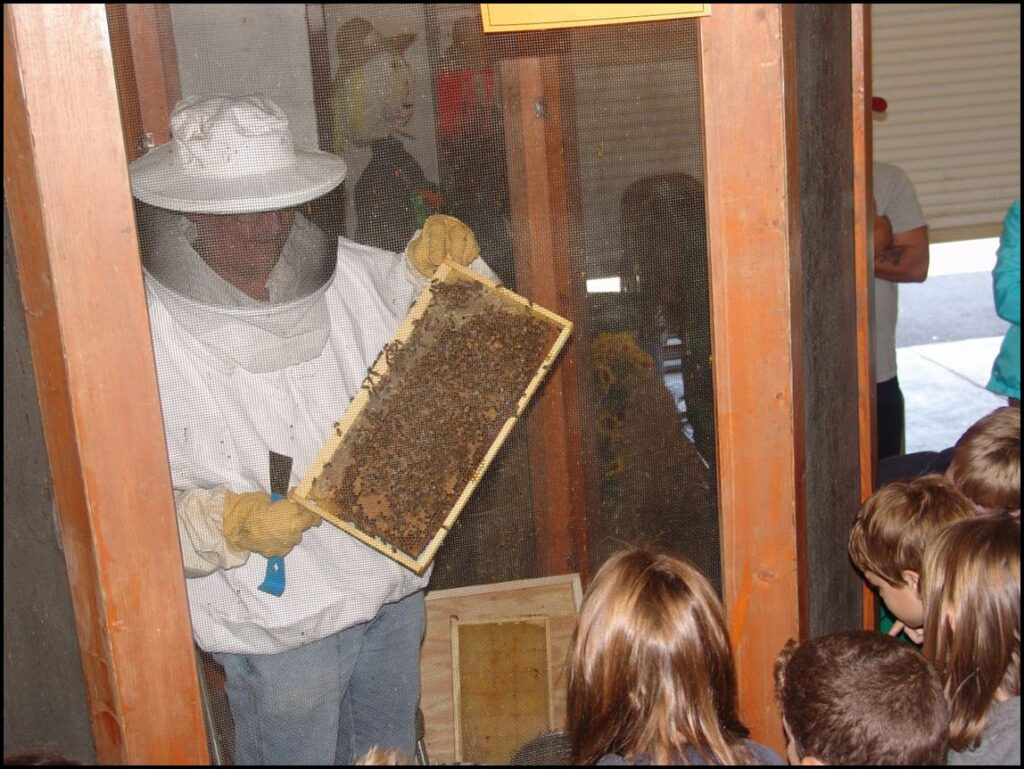 A beekeepers exhibiting a frame of honey bees.