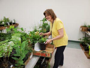 Cover photo for 2021 Master Gardener Volunteer Plant Sale Plant Descriptions