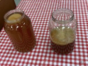 Two gallon jars of kombucha with SCOBYs on checkered table cloth.