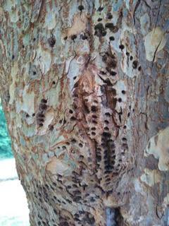 Holes in bark