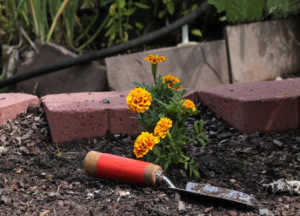Cover photo for Extension Gardener: Learn to Grow Fall Series